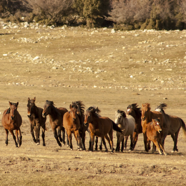 yilki-atlar